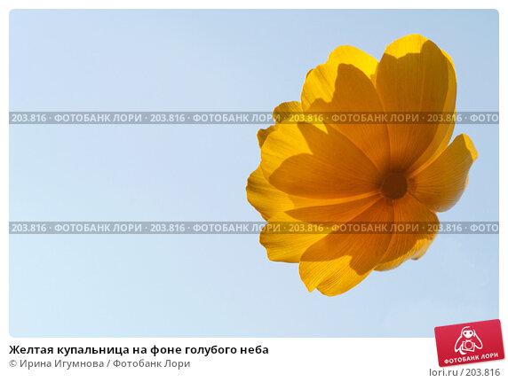 Желтая купальница на фоне голубого неба, фото № 203816, снято 13 июля 2007 г. (c) Ирина Игумнова / Фотобанк Лори