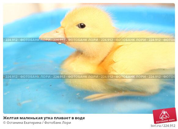 Желтая маленькая утка плавает в воде, фото № 224912, снято 25 мая 2007 г. (c) Останина Екатерина / Фотобанк Лори