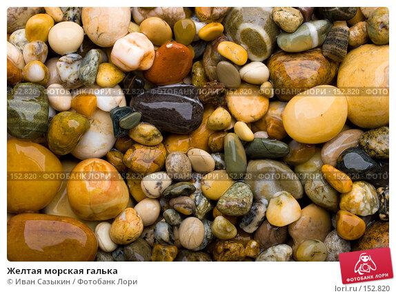 Желтая морская галька, фото № 152820, снято 9 ноября 2007 г. (c) Иван Сазыкин / Фотобанк Лори