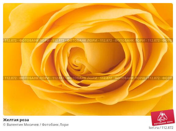 Желтая роза, фото № 112872, снято 16 февраля 2007 г. (c) Валентин Мосичев / Фотобанк Лори