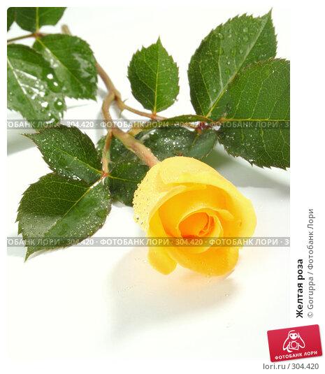 Желтая роза, фото № 304420, снято 28 мая 2008 г. (c) Goruppa / Фотобанк Лори