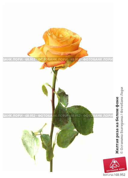 Желтая роза на белом фоне, фото № 68952, снято 4 августа 2007 г. (c) Останина Екатерина / Фотобанк Лори