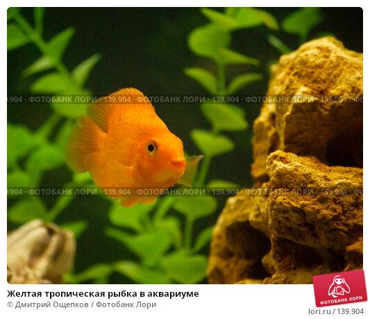 Желтая тропическая рыбка в аквариуме, фото № 139904, снято 22 апреля 2007 г. (c) Дмитрий Ощепков / Фотобанк Лори