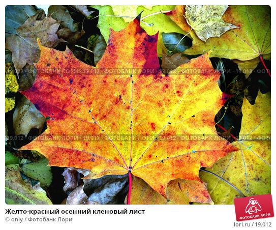 Желто-красный осенний кленовый лист, фото № 19012, снято 20 января 2017 г. (c) only / Фотобанк Лори