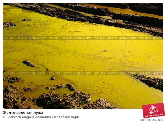 Желто-зеленая лужа, фото № 269036, снято 28 августа 2007 г. (c) Селигеев Андрей Иванович / Фотобанк Лори