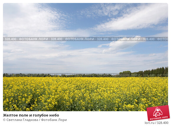 Желтое поле и голубое небо, фото № 328400, снято 12 июня 2008 г. (c) Cветлана Гладкова / Фотобанк Лори