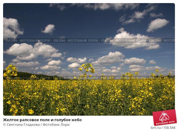 Купить «Желтое рапсовое поле и голубое небо», фото № 158544, снято 3 июня 2006 г. (c) Cветлана Гладкова / Фотобанк Лори