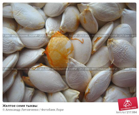 Купить «Желтое семя тыквы», фото № 217084, снято 12 января 2008 г. (c) Александр Литовченко / Фотобанк Лори