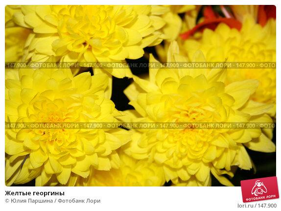 Желтые георгины, фото № 147900, снято 3 ноября 2007 г. (c) Юлия Паршина / Фотобанк Лори