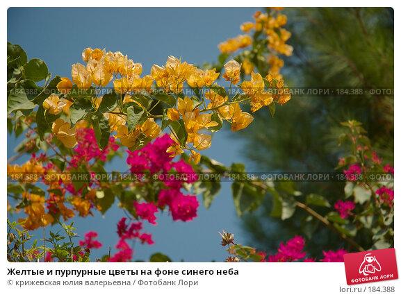 Желтые и пурпурные цветы на фоне синего неба, фото № 184388, снято 26 декабря 2007 г. (c) крижевская юлия валерьевна / Фотобанк Лори