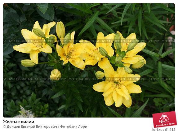 Купить «Желтые лилии», фото № 61112, снято 10 июля 2007 г. (c) Донцов Евгений Викторович / Фотобанк Лори
