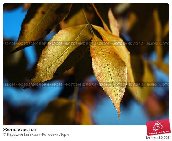 Купить «Желтые листья», фото № 89096, снято 13 декабря 2017 г. (c) Парушин Евгений / Фотобанк Лори