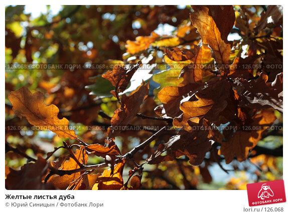 Желтые листья дуба, фото № 126068, снято 22 сентября 2007 г. (c) Юрий Синицын / Фотобанк Лори