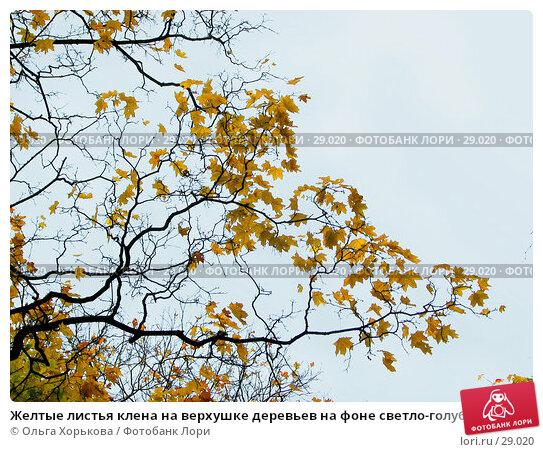 Купить «Желтые листья клена на верхушке деревьев на фоне светло-голубого неба», фото № 29020, снято 15 октября 2006 г. (c) Ольга Хорькова / Фотобанк Лори