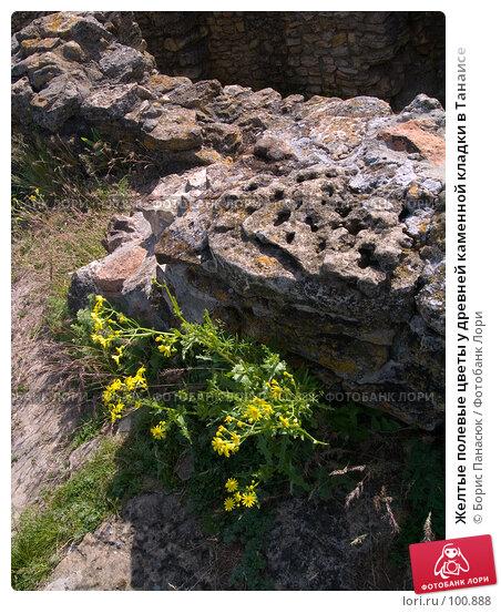Желтые полевые цветы у древней каменной кладки в Танаисе, фото № 100888, снято 22 мая 2005 г. (c) Борис Панасюк / Фотобанк Лори
