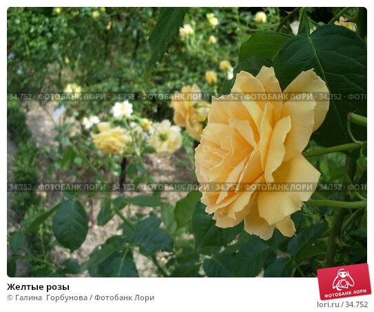 Купить «Желтые розы», фото № 34752, снято 22 июня 2005 г. (c) Галина  Горбунова / Фотобанк Лори