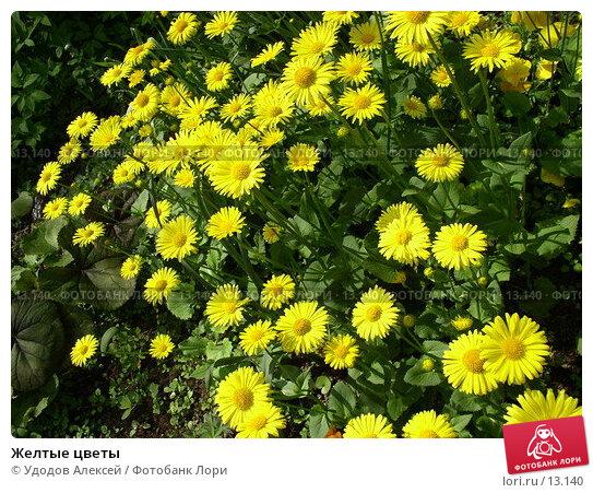 Желтые цветы, фото № 13140, снято 21 января 2017 г. (c) Удодов Алексей / Фотобанк Лори