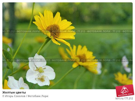 Желтые цветы, фото № 77212, снято 23 июля 2017 г. (c) Игорь Соколов / Фотобанк Лори