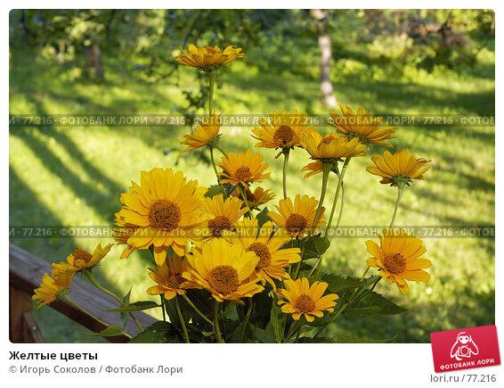 Желтые цветы, фото № 77216, снято 27 октября 2016 г. (c) Игорь Соколов / Фотобанк Лори
