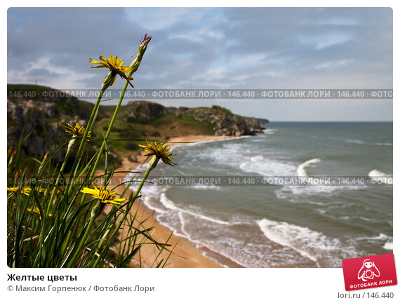Желтые цветы, фото № 146440, снято 5 мая 2006 г. (c) Максим Горпенюк / Фотобанк Лори