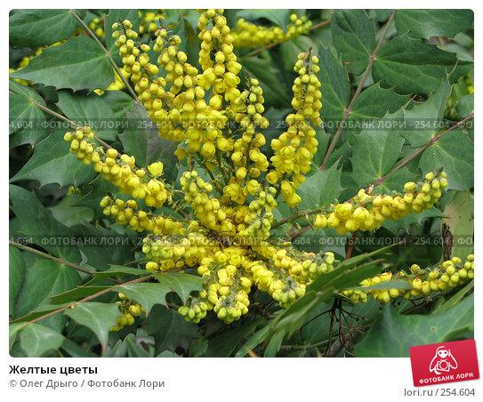 Желтые цветы, фото № 254604, снято 18 марта 2008 г. (c) Олег Дрыго / Фотобанк Лори