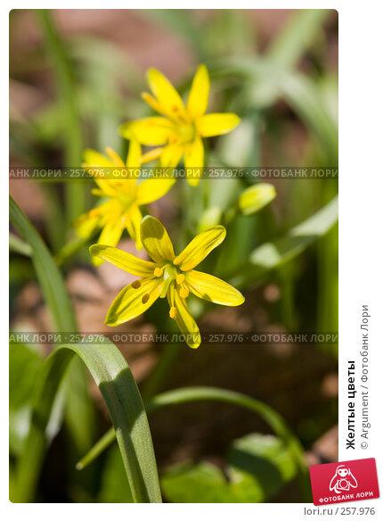 Купить «Желтые цветы», фото № 257976, снято 20 апреля 2008 г. (c) Argument / Фотобанк Лори