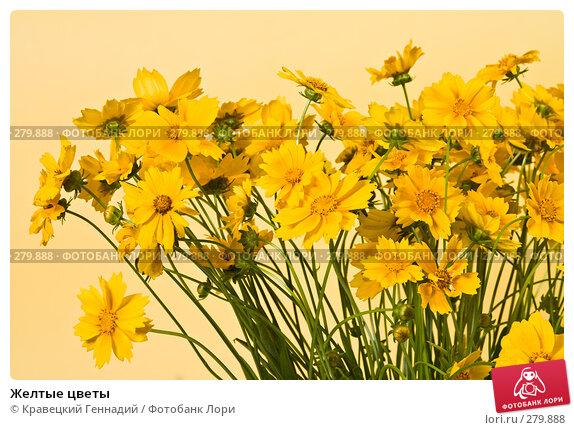 Желтые цветы, фото № 279888, снято 1 августа 2004 г. (c) Кравецкий Геннадий / Фотобанк Лори