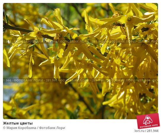 Желтые цветы, фото № 281944, снято 29 апреля 2008 г. (c) Мария Коробкина / Фотобанк Лори