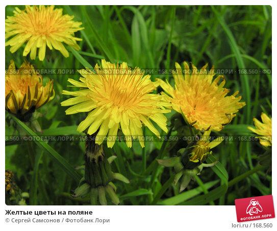 Желтые цветы на поляне, фото № 168560, снято 28 мая 2006 г. (c) Сергей Самсонов / Фотобанк Лори