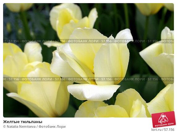 Желтые тюльпаны, эксклюзивное фото № 57156, снято 7 апреля 2007 г. (c) Natalia Nemtseva / Фотобанк Лори
