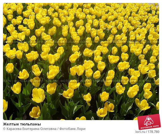 Желтые тюльпаны, фото № 178780, снято 3 января 2005 г. (c) Карасева Екатерина Олеговна / Фотобанк Лори