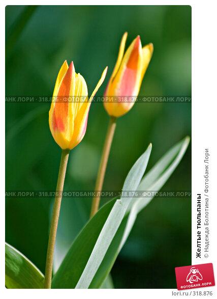 Желтые тюльпаны, фото № 318876, снято 24 апреля 2008 г. (c) Надежда Болотина / Фотобанк Лори
