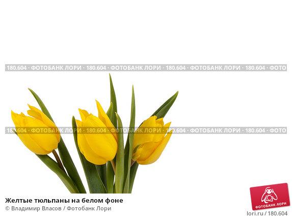 Желтые тюльпаны на белом фоне, фото № 180604, снято 19 января 2008 г. (c) Владимир Власов / Фотобанк Лори