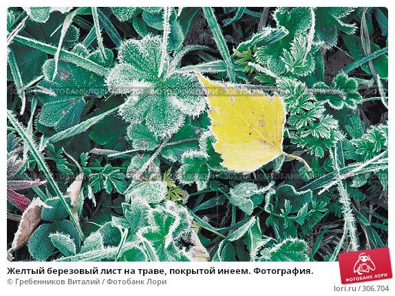 Желтый березовый лист на траве, покрытой инеем. Фотография., фото № 306704, снято 25 июля 2017 г. (c) Гребенников Виталий / Фотобанк Лори