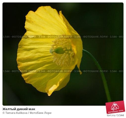 Желтый дикий мак, фото № 3544, снято 3 июня 2006 г. (c) Tamara Kulikova / Фотобанк Лори
