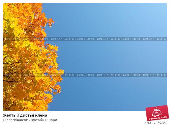 Желтый дистья клена, фото № 189332, снято 24 сентября 2006 г. (c) Бабенко Денис Юрьевич / Фотобанк Лори