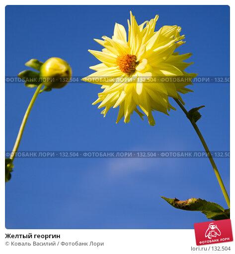 Купить «Желтый георгин», фото № 132504, снято 6 сентября 2007 г. (c) Коваль Василий / Фотобанк Лори