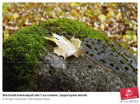 Желтый кленовый лист на камне, поросшем мхом, фото № 98052, снято 28 октября 2016 г. (c) Игорь Соколов / Фотобанк Лори