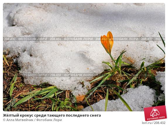 Жёлтый крокус среди тающего последнего снега, фото № 208432, снято 5 мая 2007 г. (c) Алла Матвейчик / Фотобанк Лори