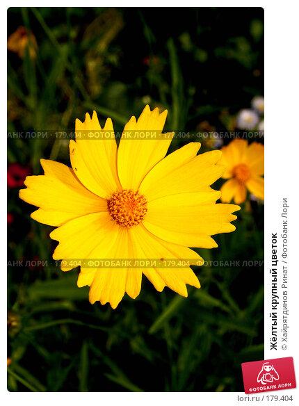 Жёлтый крупный цветок, фото № 179404, снято 27 августа 2007 г. (c) Хайрятдинов Ринат / Фотобанк Лори
