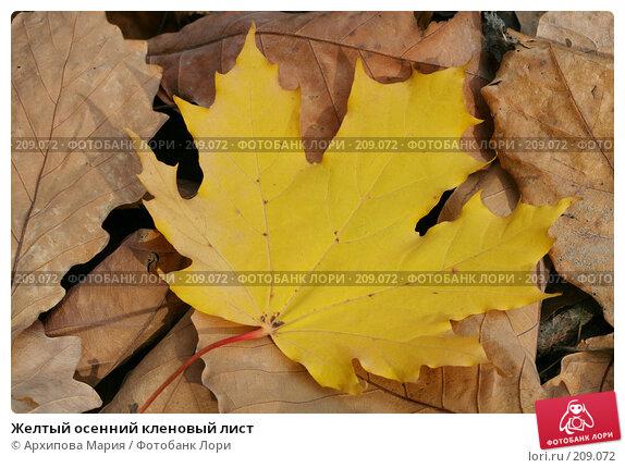 Купить «Желтый осенний кленовый лист», фото № 209072, снято 7 октября 2007 г. (c) Архипова Мария / Фотобанк Лори
