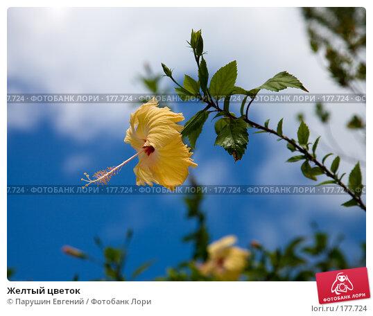 Желтый цветок, фото № 177724, снято 24 января 2017 г. (c) Парушин Евгений / Фотобанк Лори