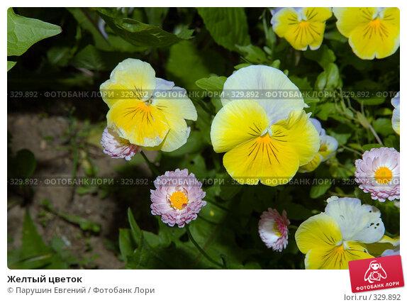 Желтый цветок, фото № 329892, снято 17 августа 2017 г. (c) Парушин Евгений / Фотобанк Лори