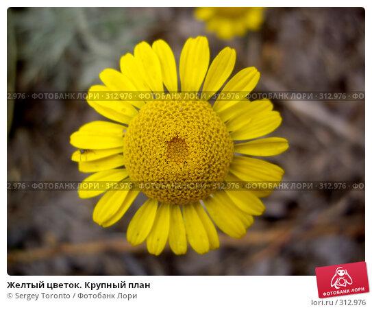 Желтый цветок. Крупный план, фото № 312976, снято 4 августа 2007 г. (c) Sergey Toronto / Фотобанк Лори