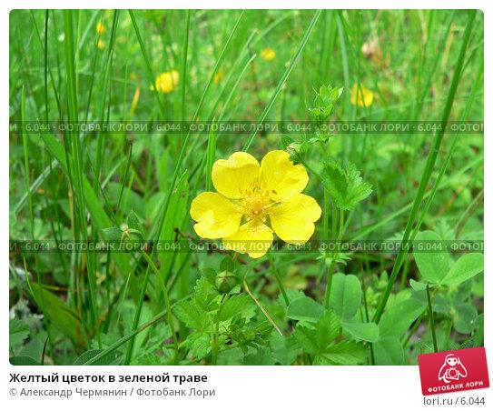 Желтый цветок в зеленой траве, фото № 6044, снято 10 июня 2006 г. (c) Александр Чермянин / Фотобанк Лори