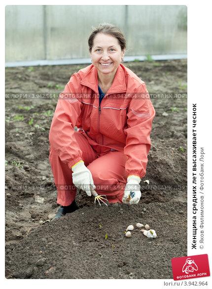 Купить «Женщина средних лет высаживает чеснок», фото № 3942964, снято 2 мая 2012 г. (c) Яков Филимонов / Фотобанк Лори