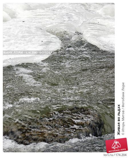 Живая во льдах, фото № 174204, снято 10 января 2008 г. (c) Игорь Митов / Фотобанк Лори