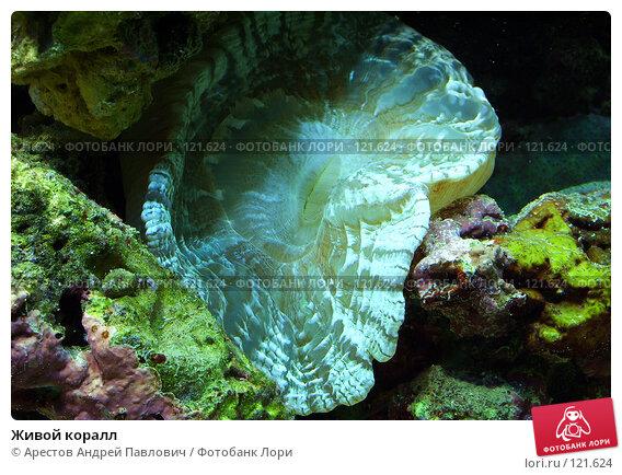 Живой коралл, фото № 121624, снято 12 ноября 2006 г. (c) Арестов Андрей Павлович / Фотобанк Лори