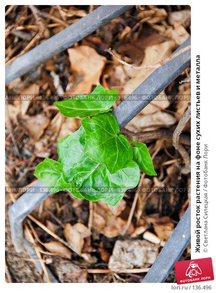 Живой росток растения на фоне сухих листьев и металла, фото № 136496, снято 2 октября 2007 г. (c) Светлана Силецкая / Фотобанк Лори