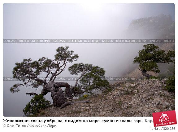 Живописная сосна у обрыва, с видом на море, туман и скалы горы Караул-Оба (Крым), фото № 320256, снято 21 мая 2008 г. (c) Олег Титов / Фотобанк Лори